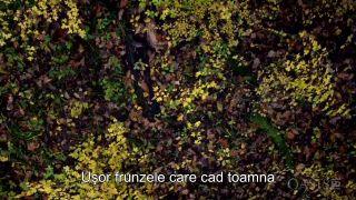 Dunarea - Amazonul Europei 2 (HD)
