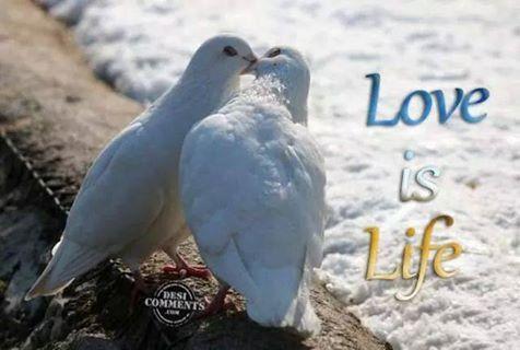 Loveislife.jpg
