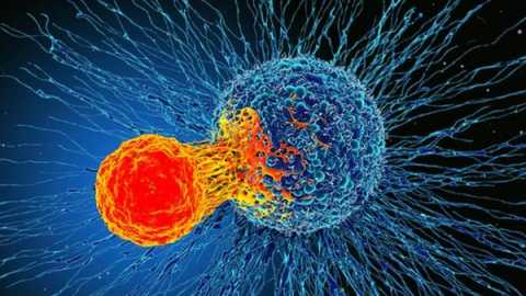 110580947_f0192831-cancer_cell_and_t_cell_illustration-spl-e1580833553486.jpg