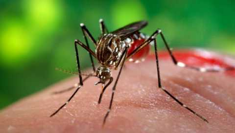 simptome_virusul_zika_20413700.jpg